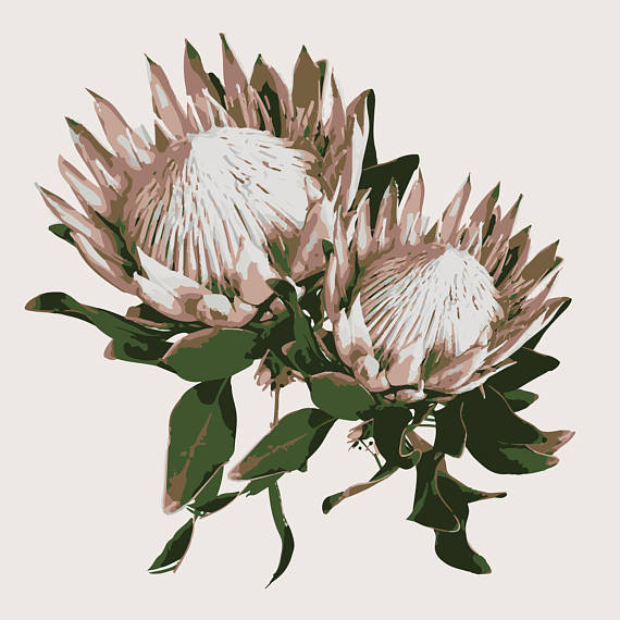 Removable Wallpaper Peel Stick Wallpaper Protea Flower Wallpaper Made In Usa Self Adhesive Tempora Flower Wallpaper Wallpaper