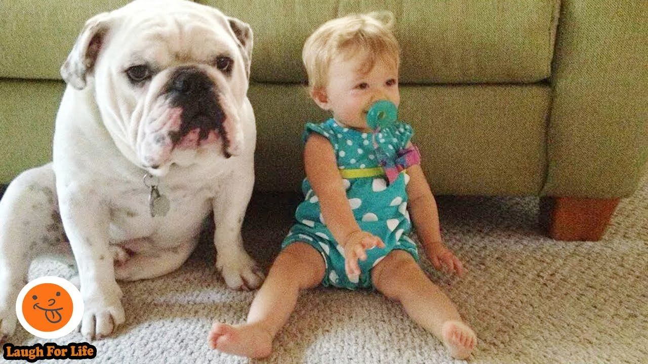 Adorable Dogs Are Babysitter 3 Funny Video Compilation In 2020
