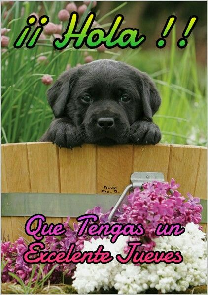 Image result for gracioso jueves