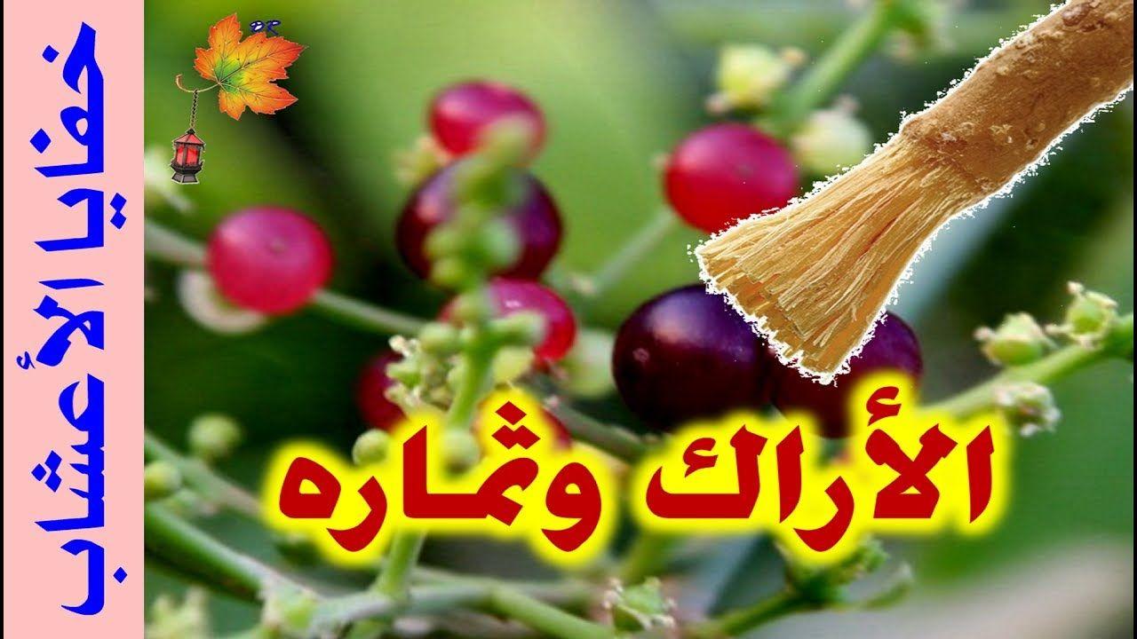 فوائد عود و ثمار شجر الأراك الكباث Fruit Vegetables Radish