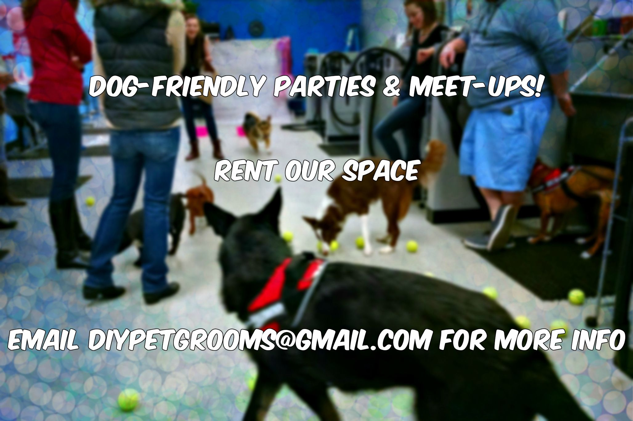 Dog party ideas space rental dogfriendly dog