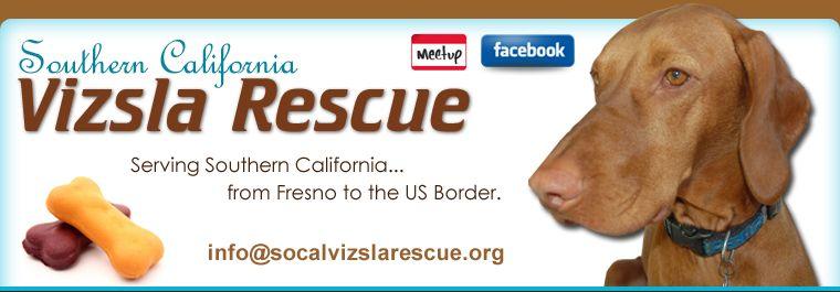 Southern California Vizsla Rescue ; The mission of Rescue