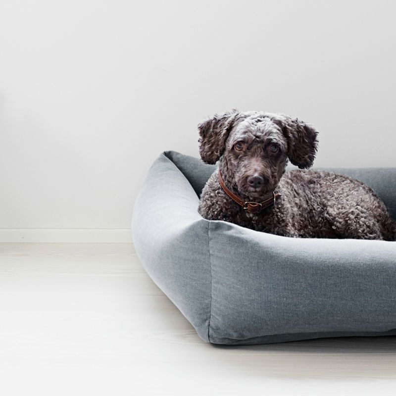 Cool Oma Paikka Dog Bed Anthracite Pets Dog Bed Dogs Bean Inzonedesignstudio Interior Chair Design Inzonedesignstudiocom