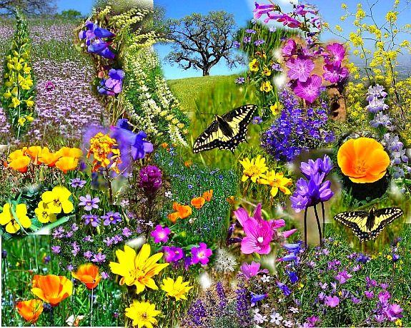 Bildergebnis für Happy Spring with butterflies
