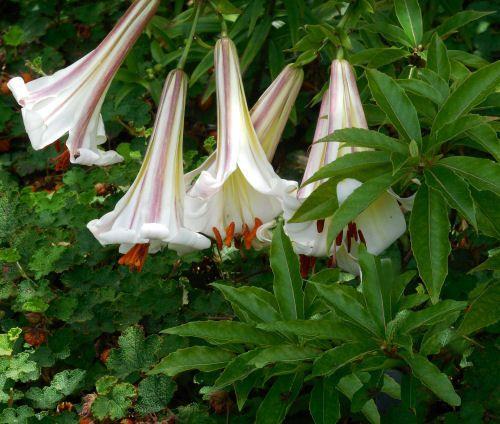 Raleigh Botanical Gardens Visit #botanicgarden