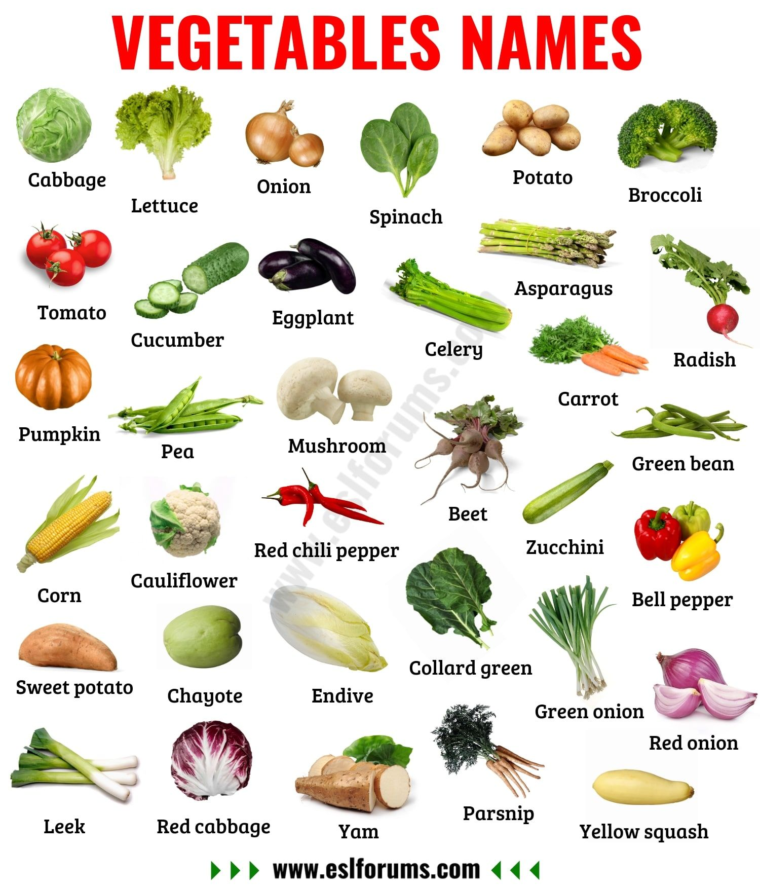 List Of Vegetables Useful Names Of Vegetables With The Picture