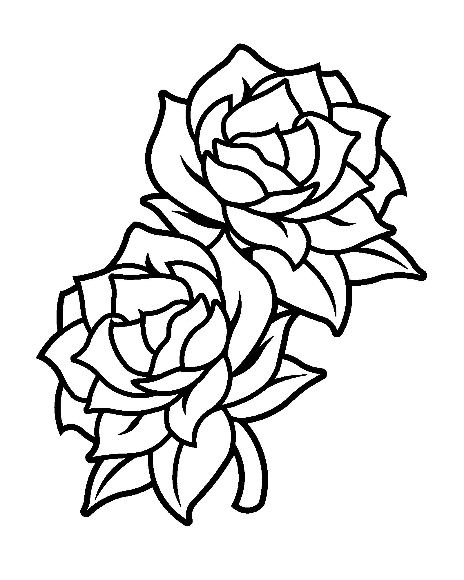Gardenia Flower Drawing at PaintingValley.com | Explore