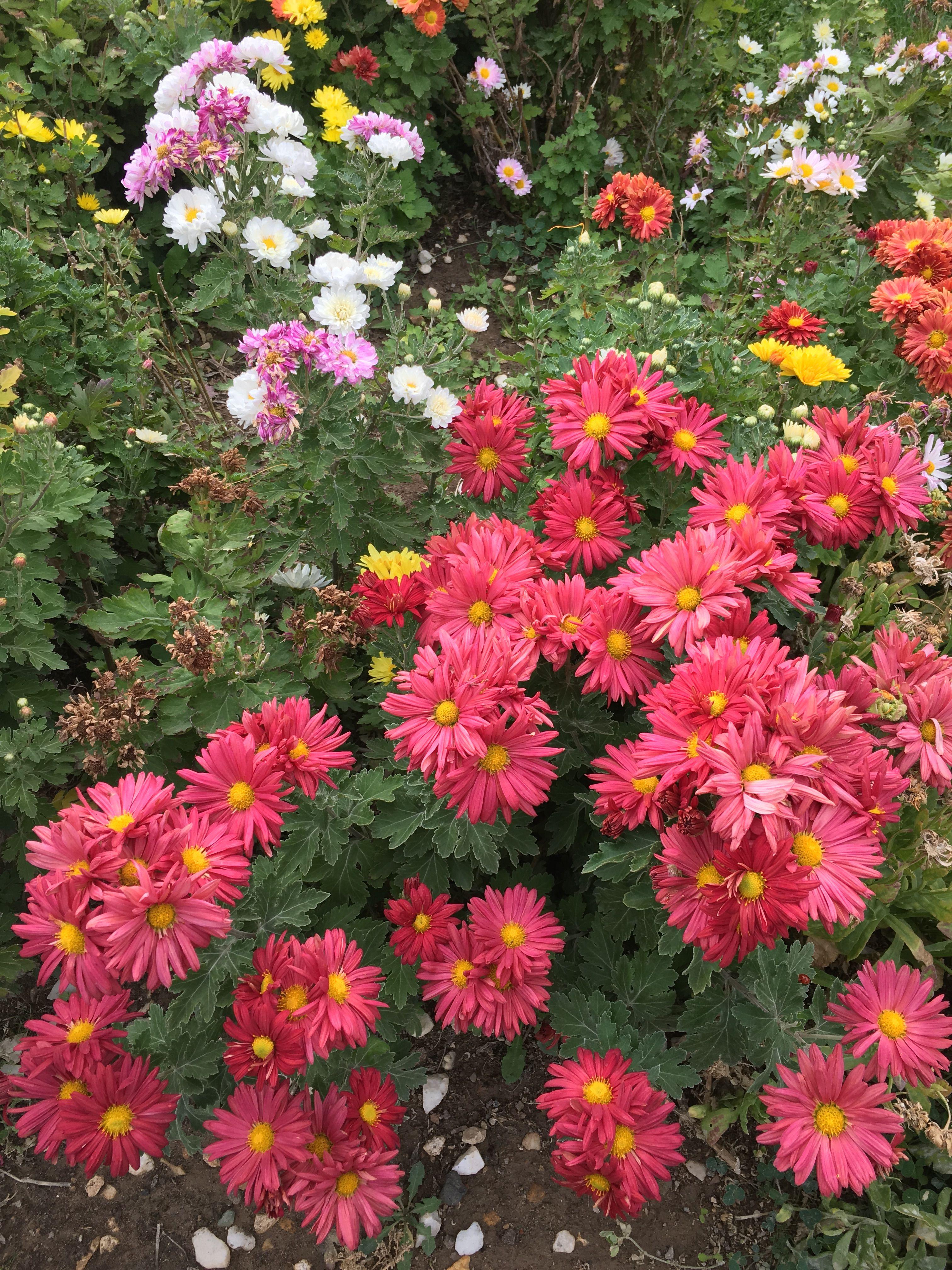 Alyson Eckmann Nude pinzahra sadighzadeh on my flower photos   flower photos