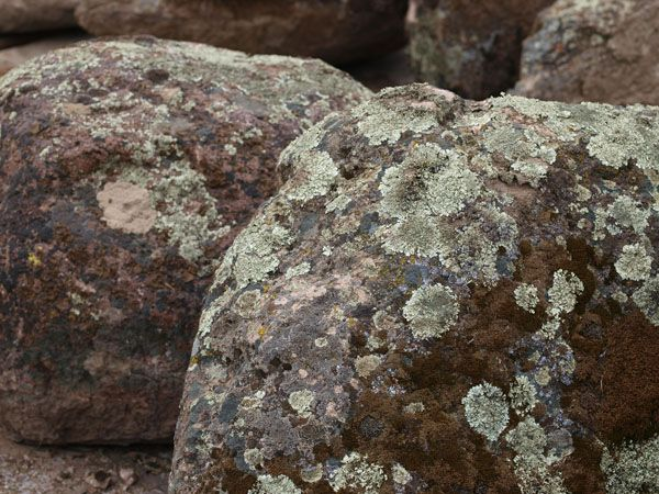 Colorado Moss Landscape Boulders Bourget Bros Building Materials Landscaping With Boulders Bouldering Moss