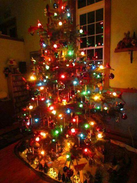 Pin by Rachel Rogers on Christmas! ) Pinterest Xmas tree and Xmas