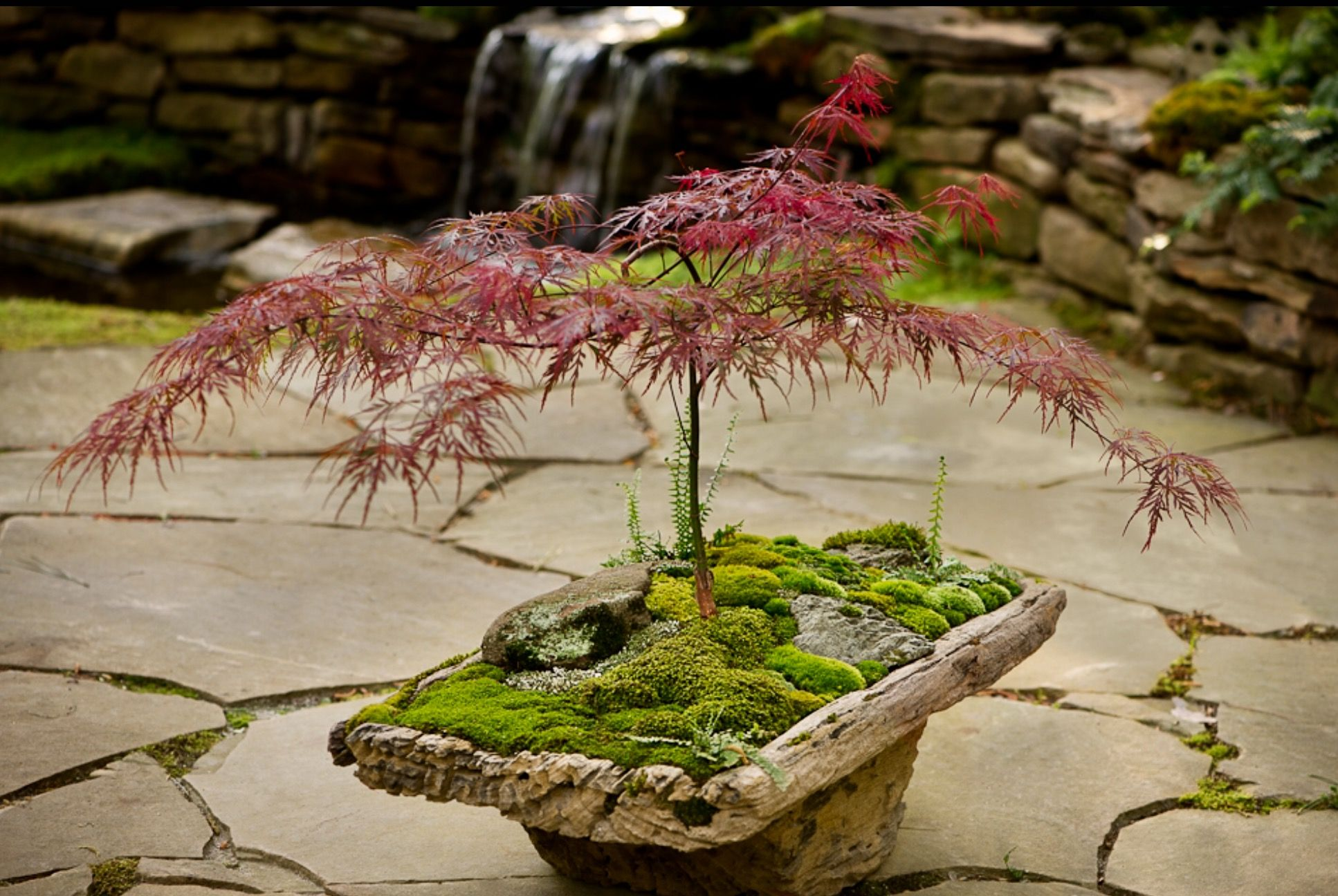 Beautiful Balance Between The Tree And Base Japanese Garden Plants Japanese Garden Design