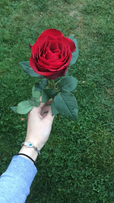 Pin By Kensi Deeks On Hands Beautiful Roses Beautiful Flowers Floral Wallpaper Iphone