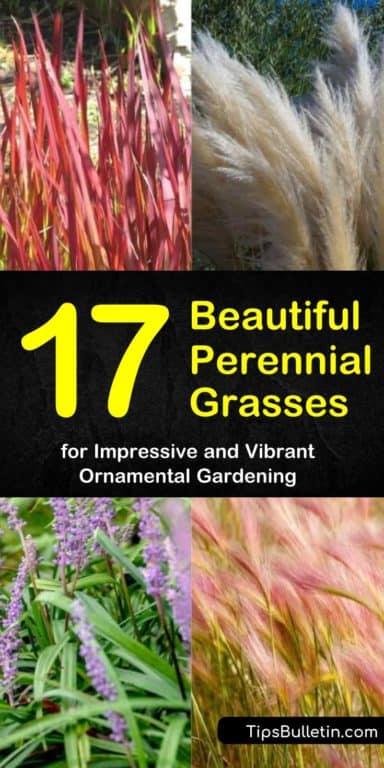 18 plants Outdoor grasses ideas
