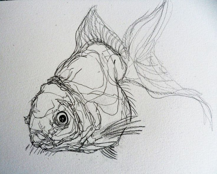 Line Art Of Fish : Quick fish studies draw and sketches