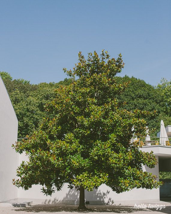 Landscape, Nature Photography, Green Tree, Spring Print, Minimalist Art Print, Wall Decor, Modern Decor - One Tree