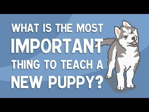 That Dog Geek Creates Easy To Understand Videos And Graphics On Dog Training And Behaviour Subscribe To O Socializing Dogs Teach Dog Tricks Puppy Socialization