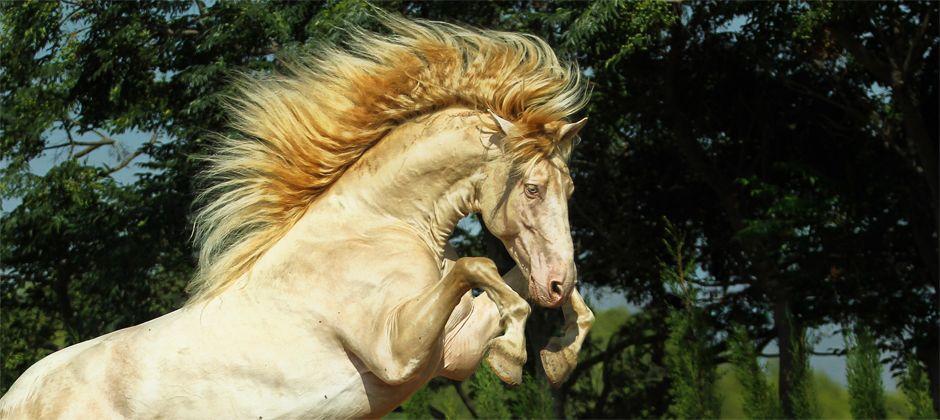 """""""Le cheval est un cadeau de dieu à l'homme.""""Proverbe arabe"""