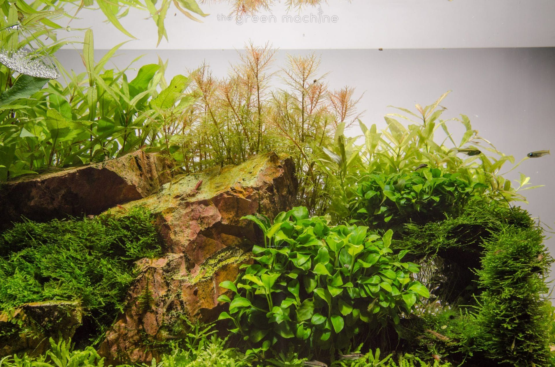 Escarpment Planted Tank Aquascape by James Findley for The Green ...