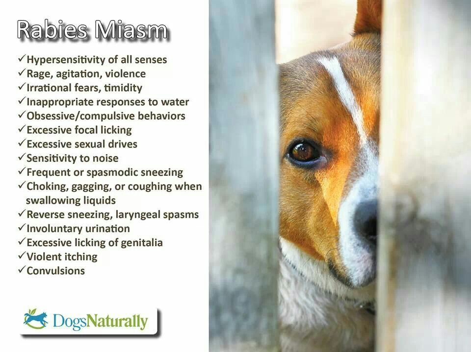 Rabies Miasm Dogs Naturally Magazine Dogs Irrational Fear