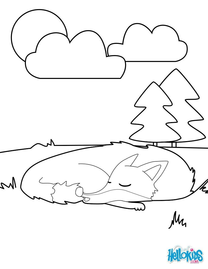 Sleeping Fox Coloring Page More Forest Animals Sheets On Hellokids