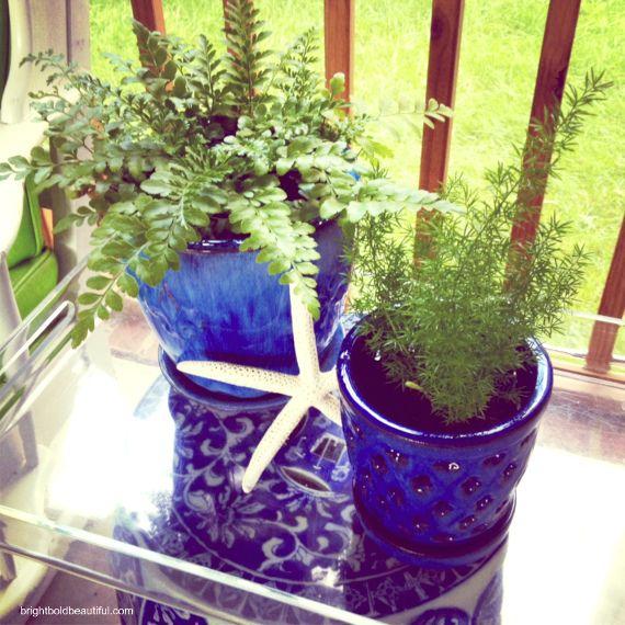 cobalt blue planters + green ferns