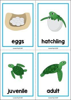 Ocean Preschool Centers Skoldpaddor Och Barn