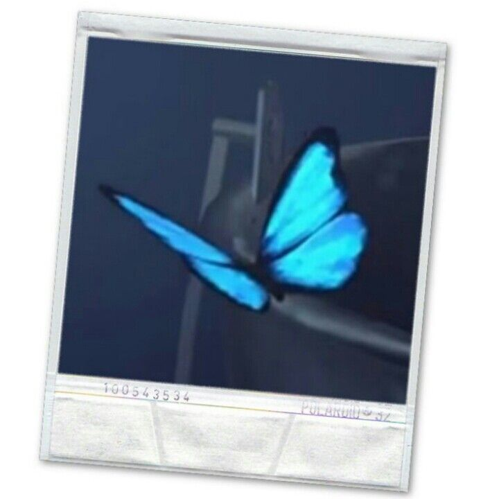 Life is strange https://play.google.com/store/apps/details?id=com.roidapp.photogrid iPhone https://itunes.apple.com/us/app/photo-grid-collage-maker/id543577420?mt=8