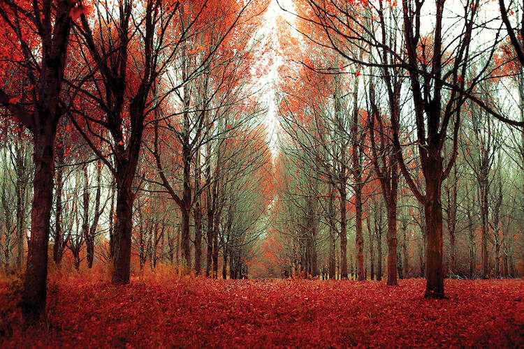 Nature Photography October Light Natural Decor Digital Download Canada Fall Decor Fall Photography Canadian Decor Fall Colours