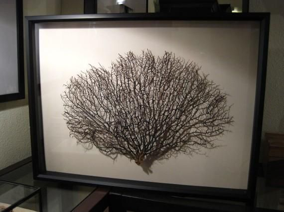 sea fan wall art artwall decor large framed black sea fan seafan coral reliquary by