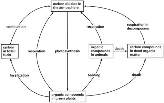 carbon dating ocr physics However the development of more precise dating methods, such as radiocarbon-dating  oxidizable carbon ratio: even though ocr has  photos | physics.