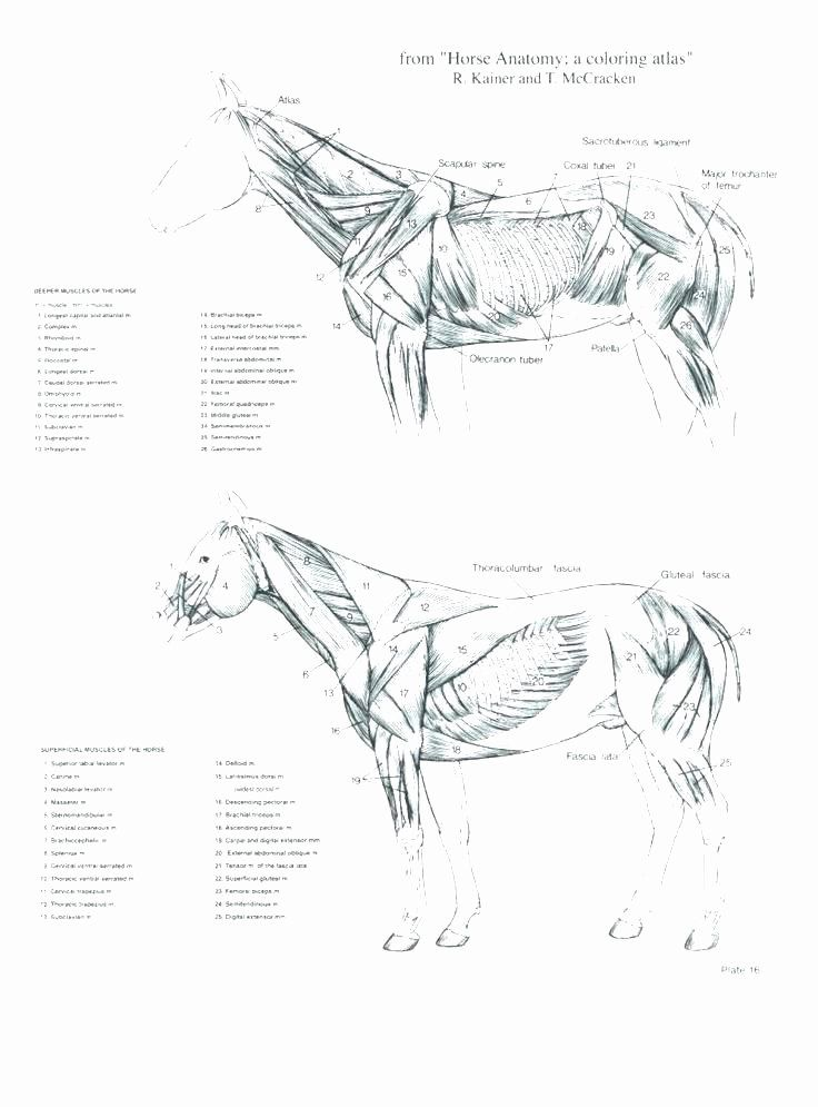 Veterinary Anatomy Coloring Book Inspirational Saunders ...