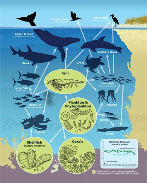 Food Webs & Biodiversity Panic in the North Atlantic