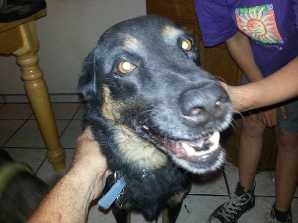 Online Petition Dog List Animals Dog Adoption
