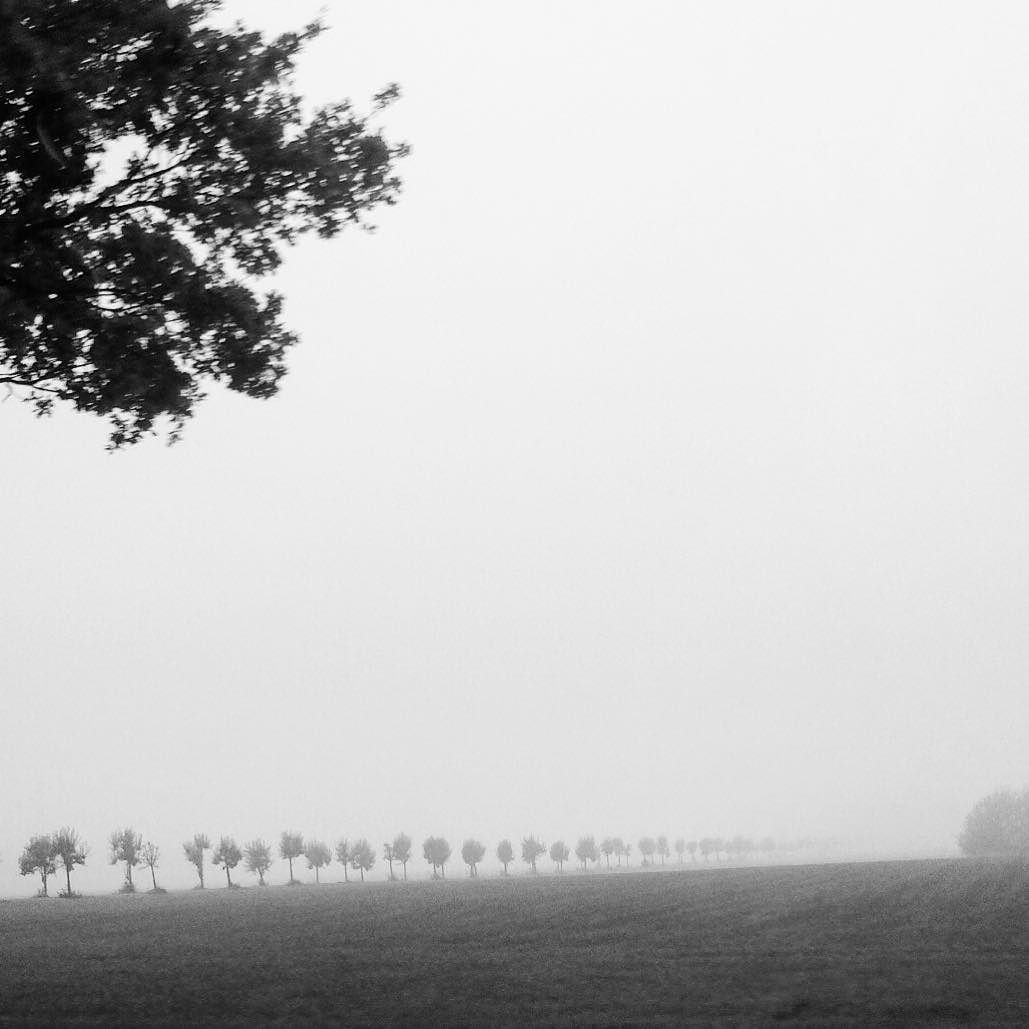 Misty moods....... #trees #fiftyshades_of_nature #ig_captures #tree_captures #super_holland #dutchmoments #holland_photolovers #autumn #allwhatsbeautiful #wheather #loves_netherlands #igholland #ptk_nature #photography #bnw #blackandwhitephotography #monochrome by mariannewesterbeek