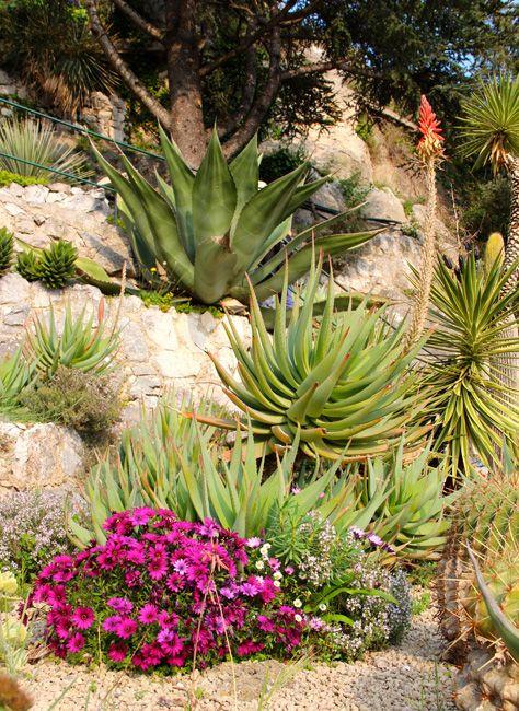 Visite Du Jardin D Eze Best Open Gardens Parks Estate Gardens