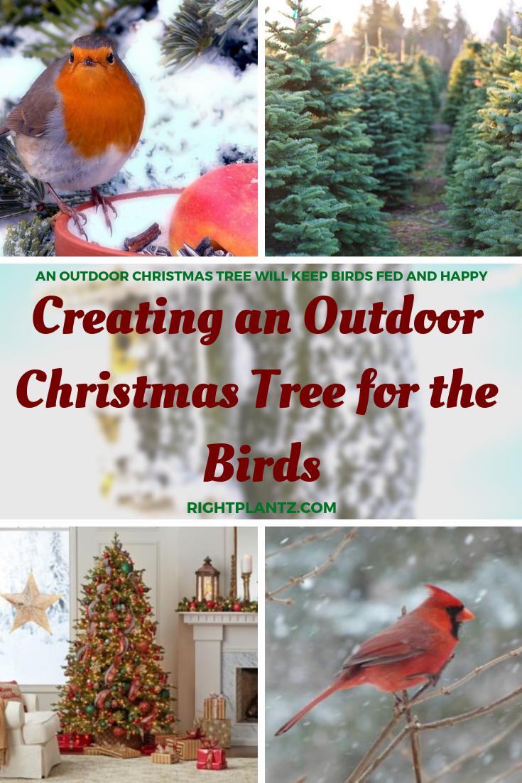 Outdoor Christmas Tree Decorations For Birds Valoblogicom
