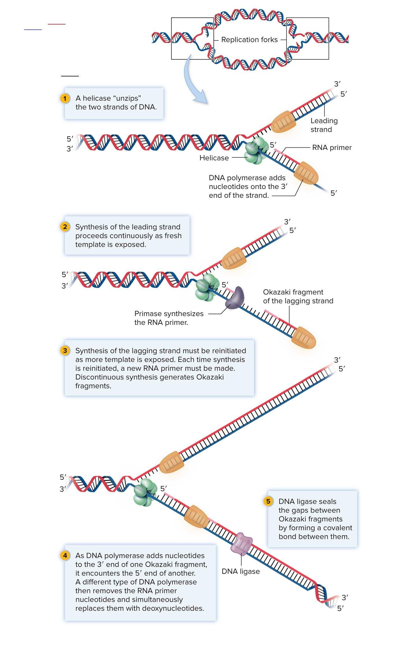 Forktattoos In 2020 Study Biology Molecular Biology Biology Notes
