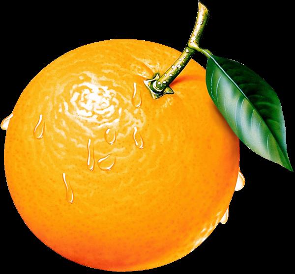 orange clipart picture ovocie fruit pinterest clip art rh pinterest com orange clip art cross orange clipart black and white