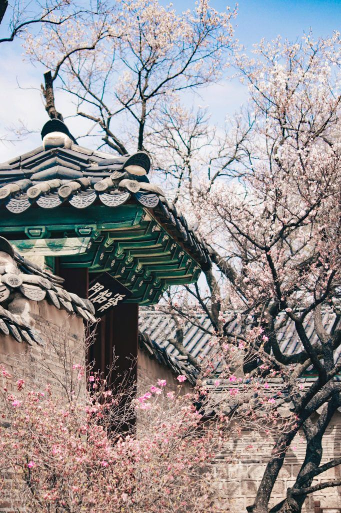 Spring In Korea 40 Photos To Convince You It S The Best Time To Visit South Korea Television Of Nomads South Korea Photography Korea Wallpaper City Landscape