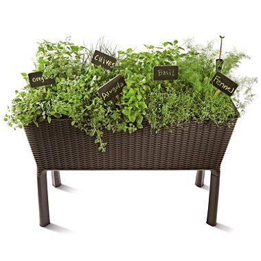 Keter elevated garden bed sam 39 s club garden pinterest elevated garden beds and gardens Keter easy grow elevated flower garden planter