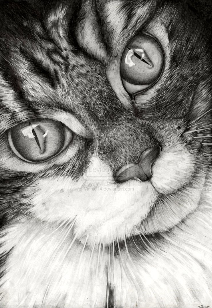 Cat Drawing by Vinnie14 on deviantART. Amazing