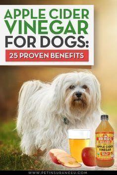 pple Cider Vinegar Dog Treatments Apple cider vinegar or ...