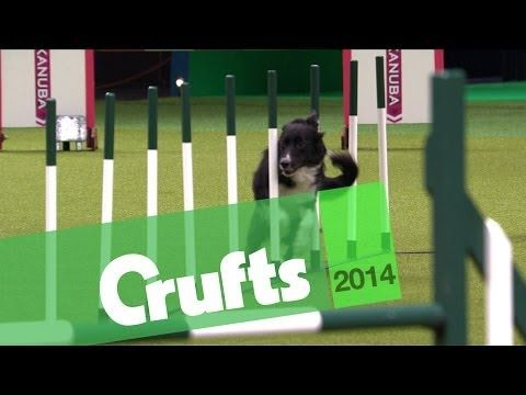 Agility Jumping Large Dogs Winner Crufts 2014 Youtube