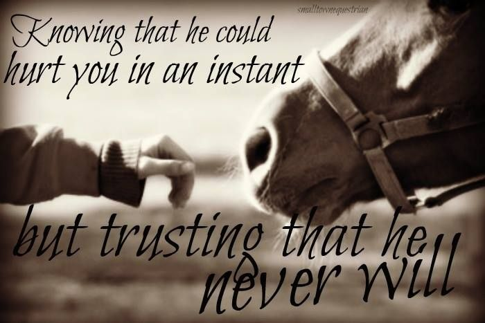 Cute Horse Quotes: Pin By Sara On Horse Quotes