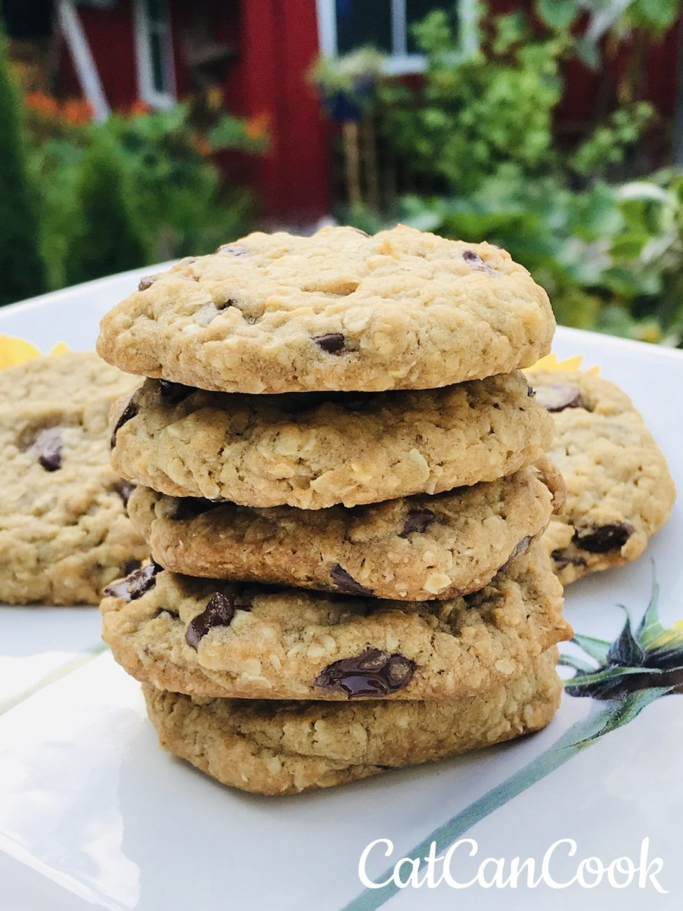 Easy Oatmeal Chocolate Chip Cookies Cat Can Cook Easy