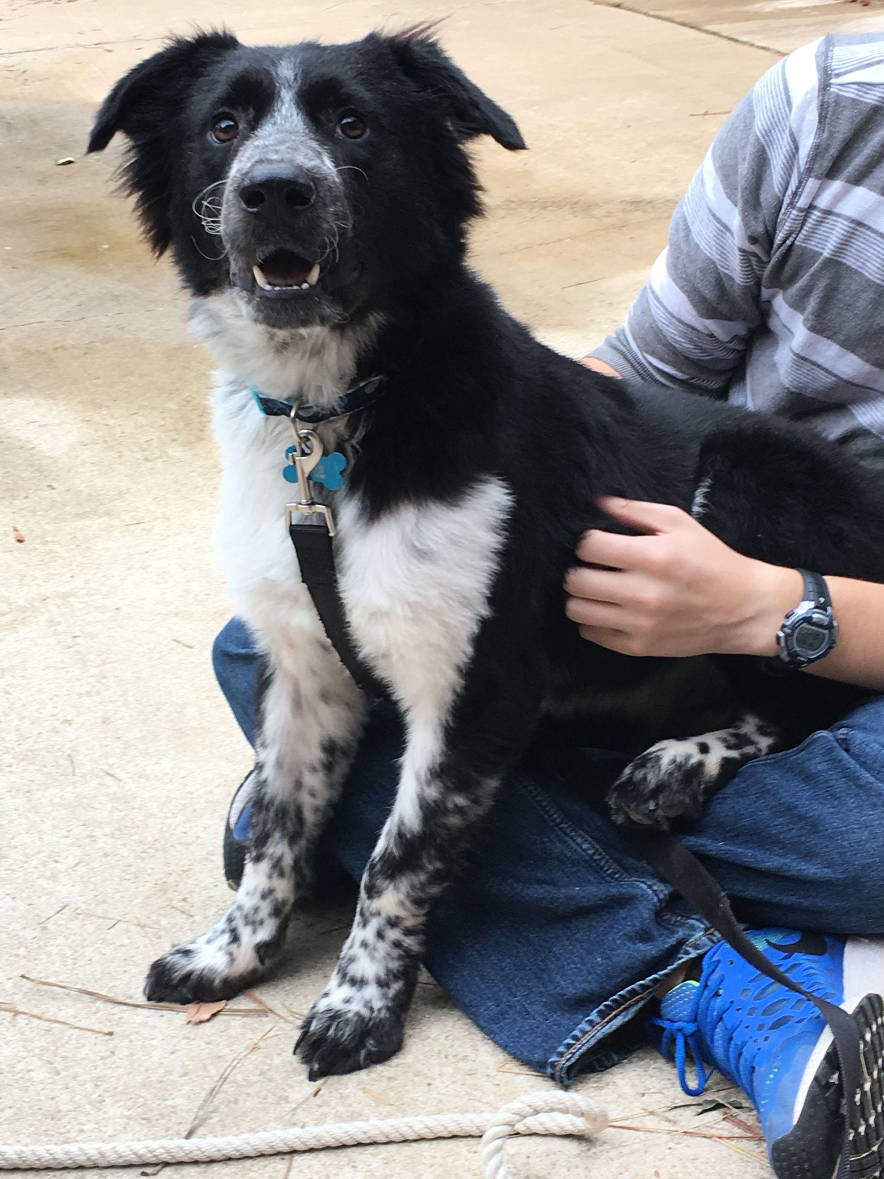 Adopt Jupiter On Dogs Dogs Animal Shelter Pets