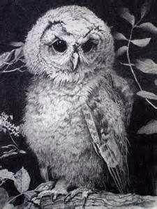 Owl Drawings Art - Bing Images
