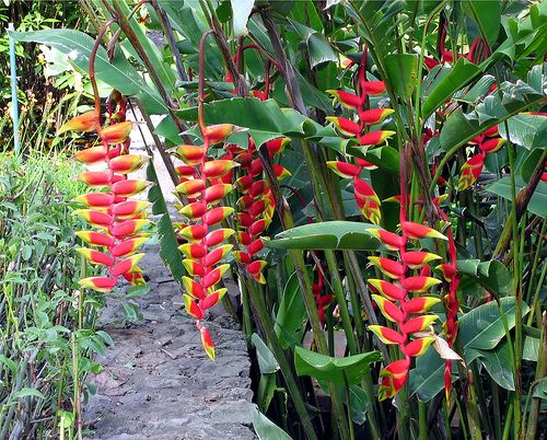 Tropical Plants In Guatemala In The Garden Of The Porta Hotel