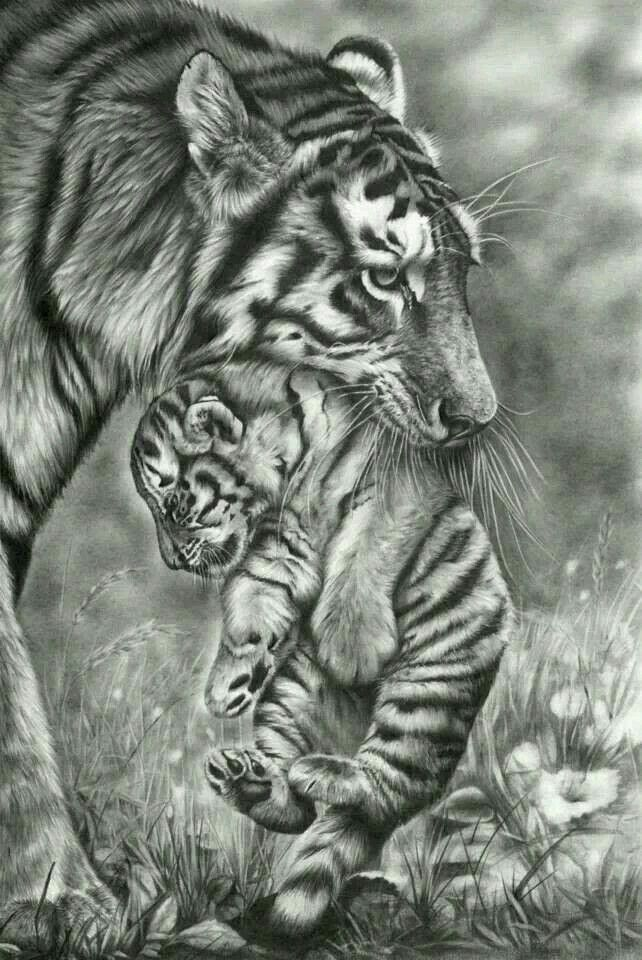 Felins With Images Pencil Drawings Of Animals