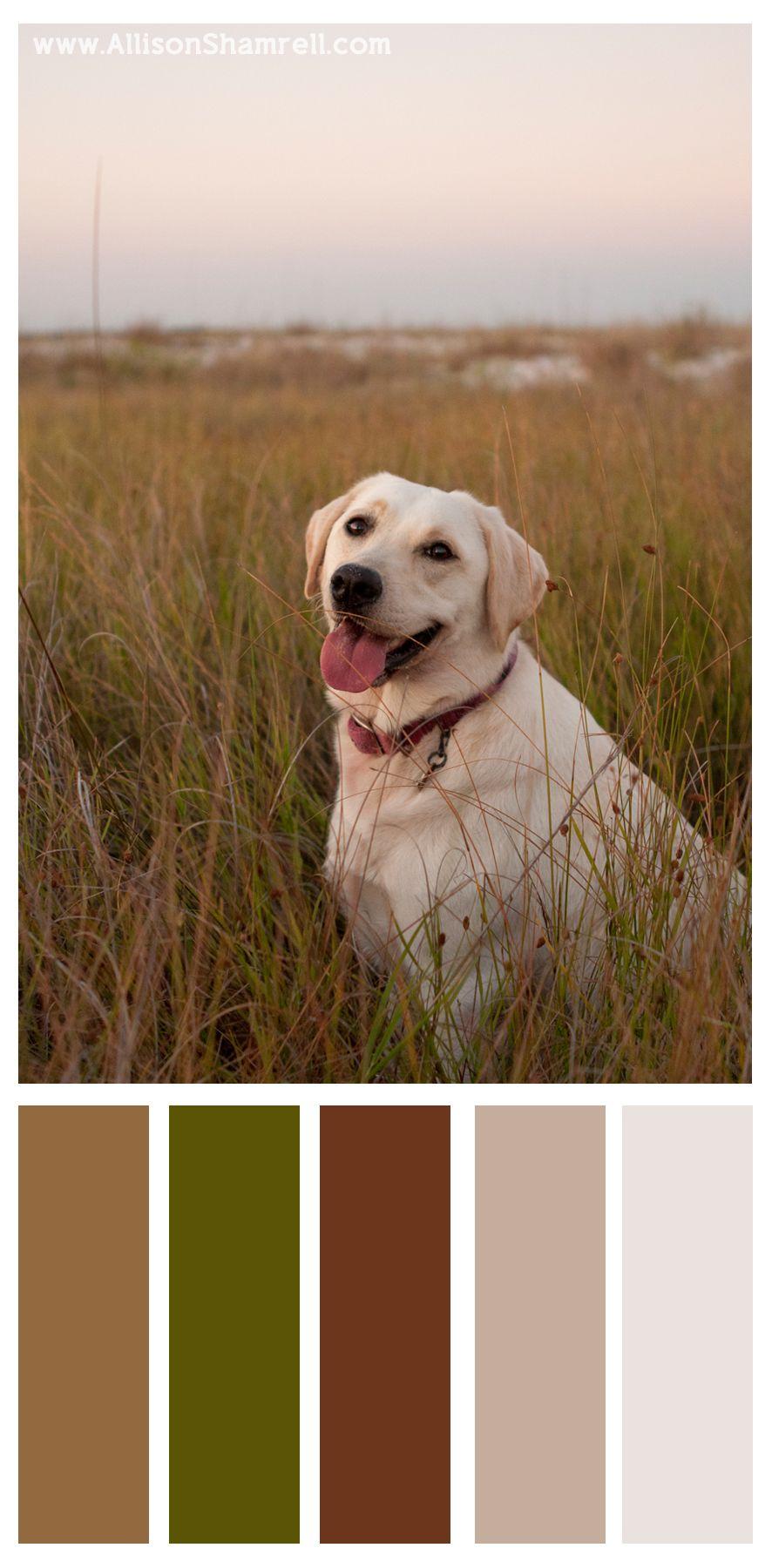 San Diego S Best Pet Photography By Allison Shamrell San Diego S Best Pet Photography Yellow Labrador Golden Retriever Colors Labrador